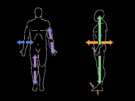 Axes et références anatomiques